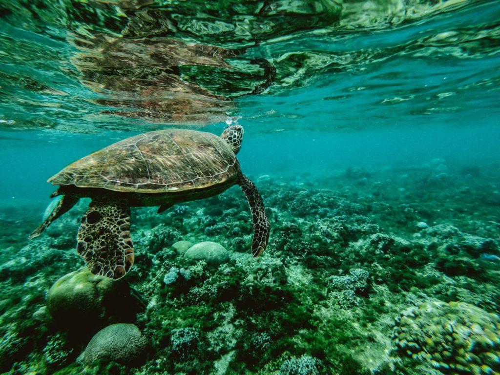 conservation de la biodiversité marine